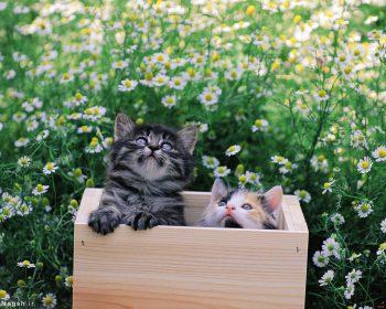 گربه ها در جعبه