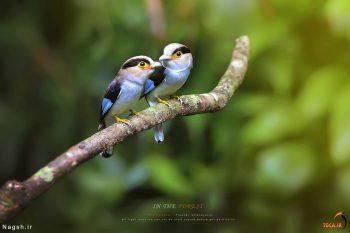 دو پرنده رنگی جالب