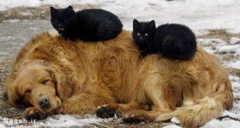 گربه های بازیگوش و سگ بی حال