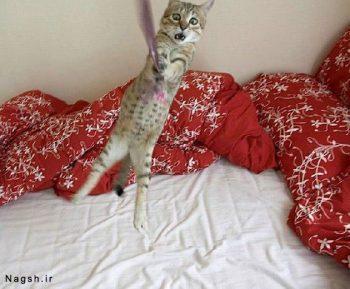 گربه جالب و بامزه