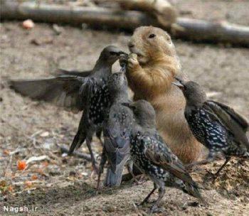 رفتار بامزه پرندگان