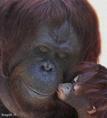 محبت مادرانه