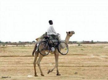 شترسواری با دوچرخه!