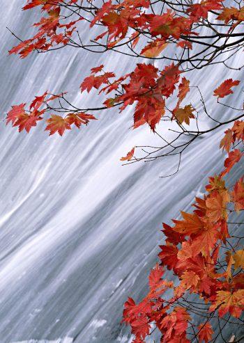 برگهای پاییزی در کنار آبشار