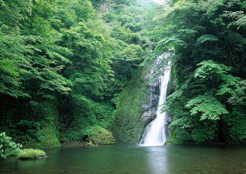آبشاری سر سبز