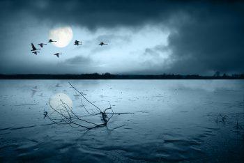 پرندگان دریا در شب