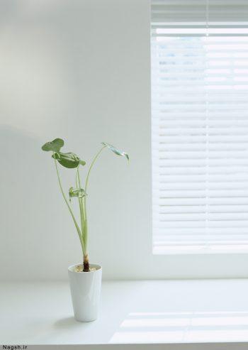 یک گلدان گل جلوی پنجره