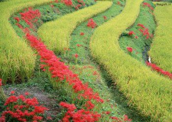 رویش پلکانی گیاهان