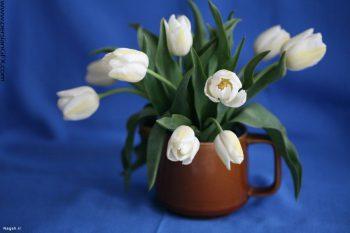 گلدانی از لاله های سفید