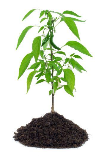 کاشت گیاه