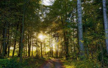 جنگل سبز