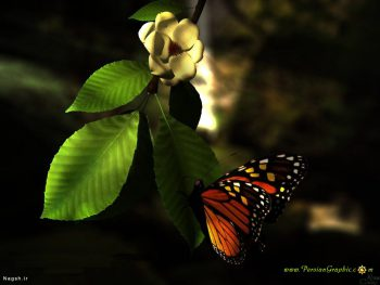 پروانه و گل