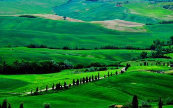 طبیعت سبز