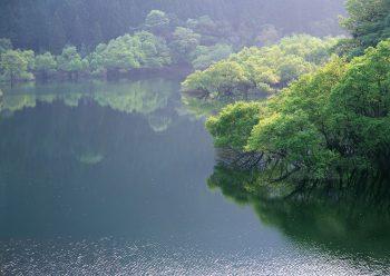 جنگل و دریا