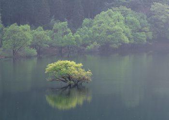 درختچه ای در وسط آب