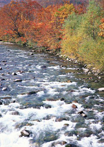 رود جاری در پاییز