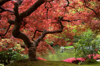 درخت با برگهای پاییزی