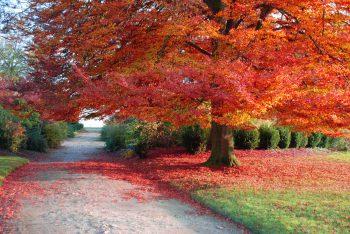 فصل رنگی پاییز