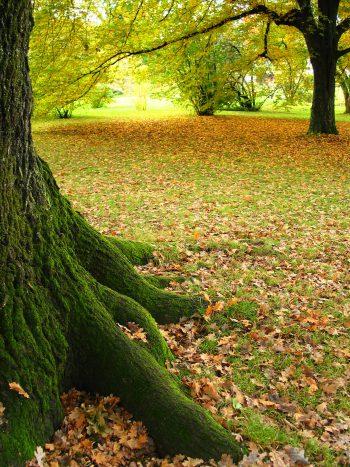فصل برگ ریزان