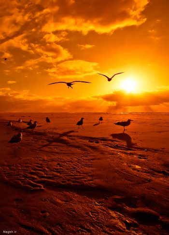 پرواز پرندگان در غروب