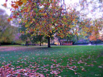 درخت پاییز