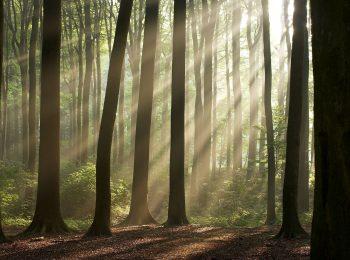 تابش نور از بین درختان