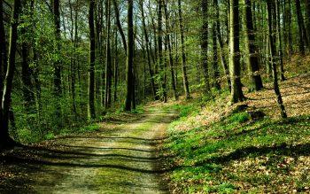 درختان جنگل