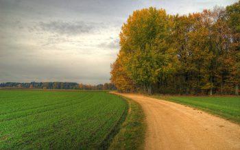 درختان سر جاده ها