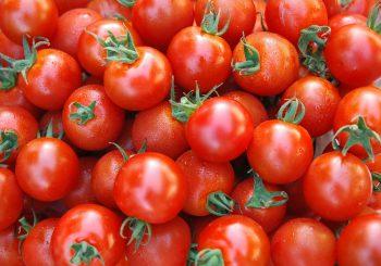 انبوهی از گوجه فرنگی