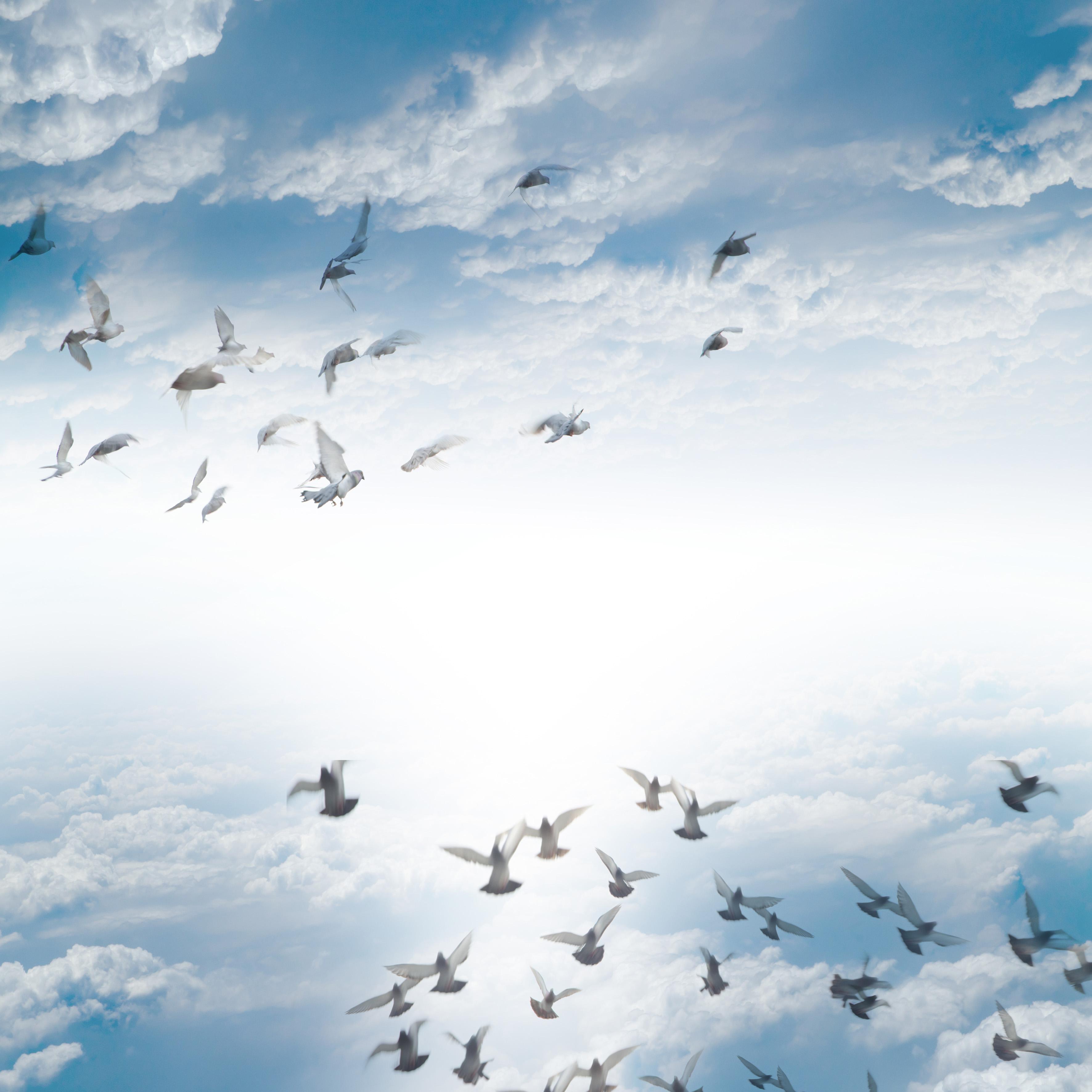 کبوترهای در حال پرواز