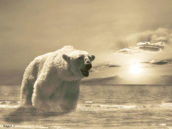 خرس سفید و بزرگ در آب