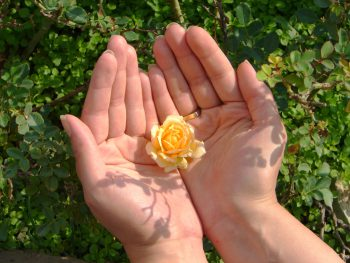 گل زرد رنگ داخل دست