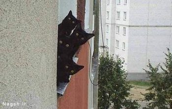 فضولی گربه ها