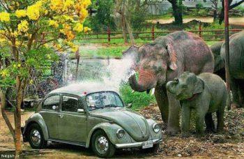 شستن ماشین توسط فیل