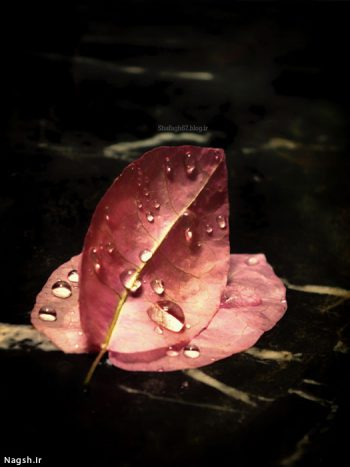 تصویر هنری برگ پاییزی