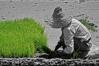 تصویر هنری مرد کشاورز