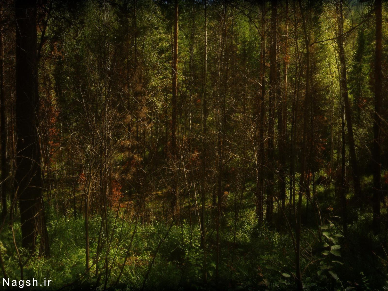 درختان سر به فلک کشیده