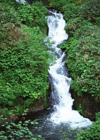 آبشاری از میان تپه ای سر سبز