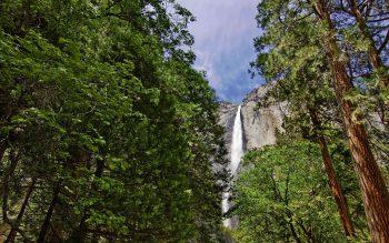 آبشاری به بلندی درختان