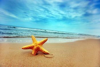 ستاره دریایی کنار ساحل