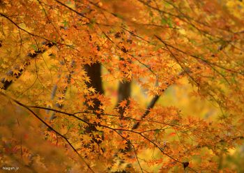 درختان پاییزی جنگل