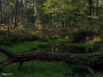 تصویر جنگل زیبا