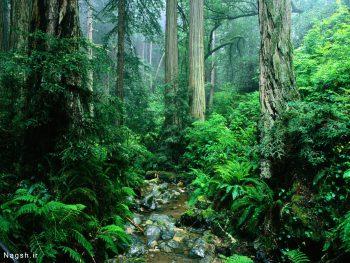 رود در جنگل