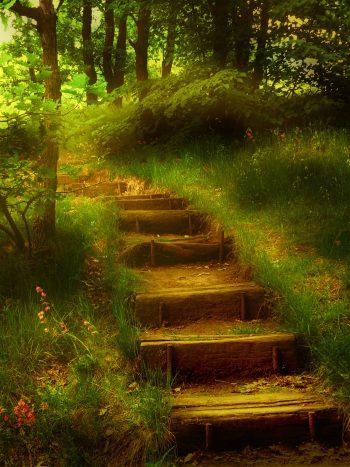 تصویر جنگل و پله