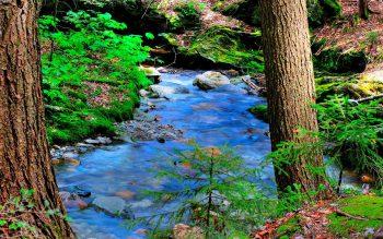 رود جاری از زیر درختان