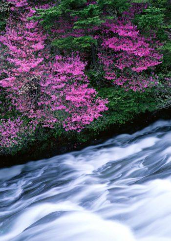 رویش گلها در کنار رود