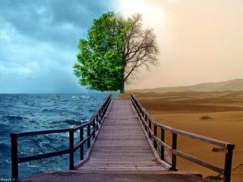درخت برزخی