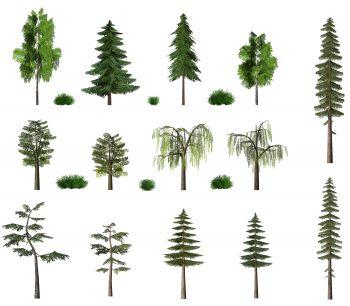 تصویر درختچه ها