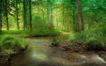 درختان سبز
