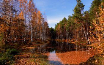 درختان خزان زده